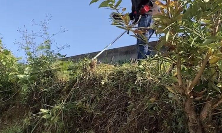 寝屋川市の雑草伐採及び庭木剪定