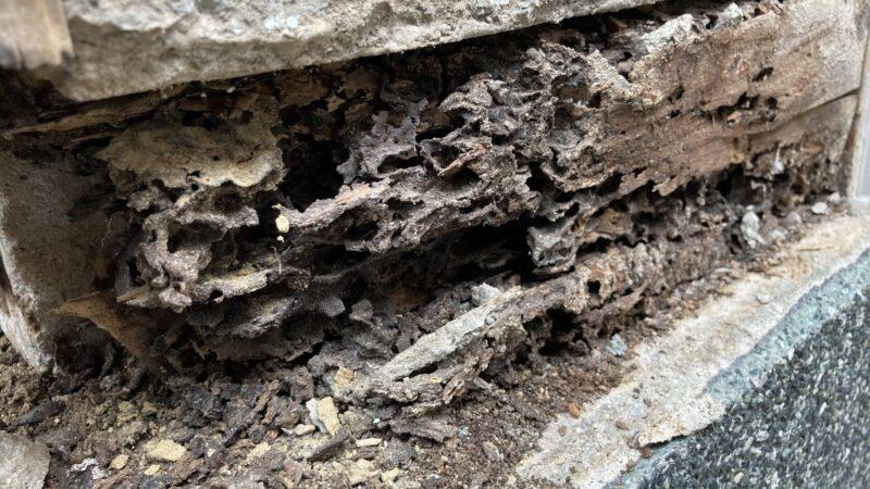 壁が崩れてる! 白アリ被害 外壁補修工事 交野市