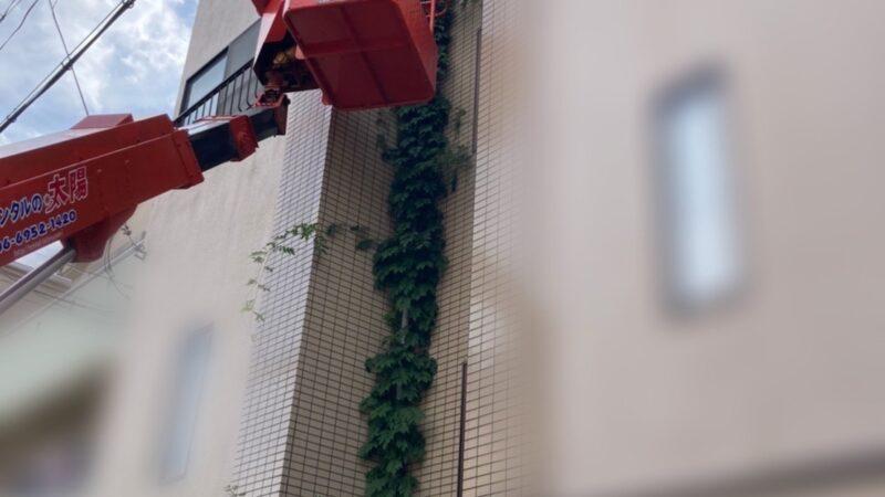 雨樋に絡まった植物撤去 寝屋川市